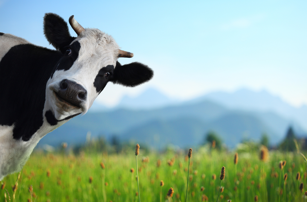 5 reasons why grass fed beef is better for us